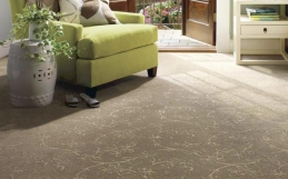 How Often Should I Have My Carpet Professionally Cleaned?