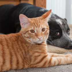 The Truth About Pet Urine