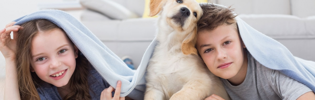How to Remove Pet Odors and Stains