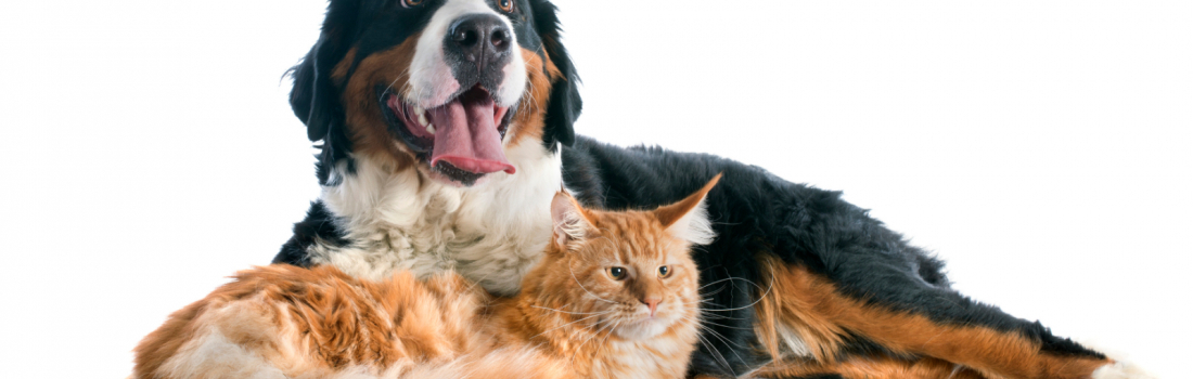 How to repair carpet damage by pets