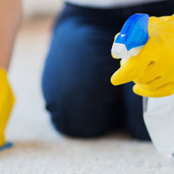 How to Spot Clean a Carpet