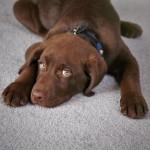 carpet-repair-vancouver