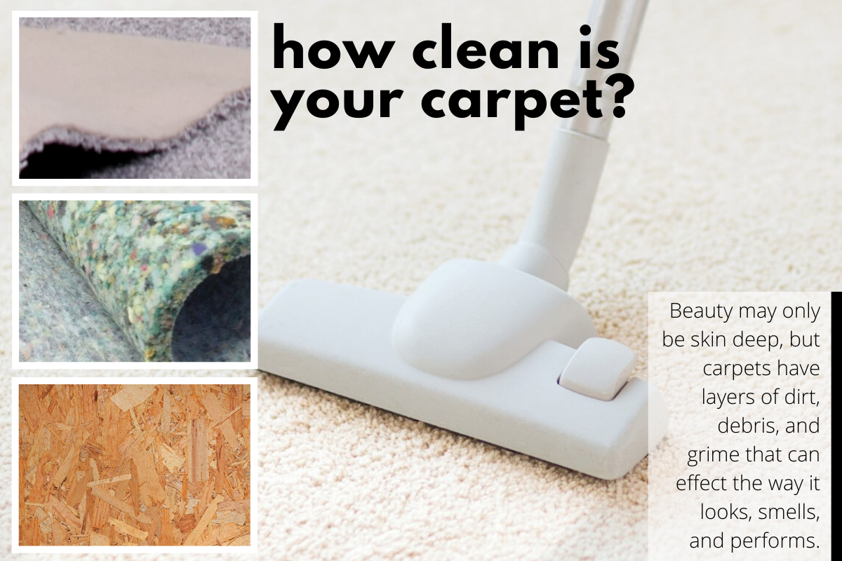 Infographic regarding how clean your carpet is