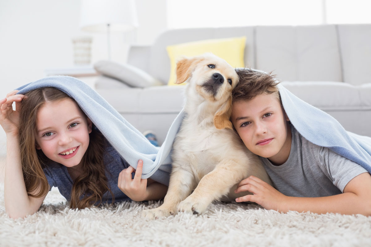How To Remove Dog Smell From Home