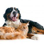 Orange cat and multi-colored dog on carpet